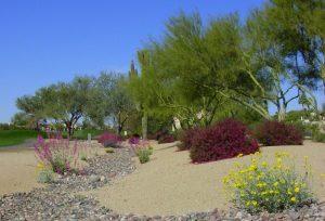 hummingbird garden desert southwest