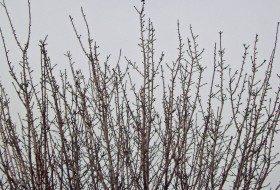 A Winter Hummer Returns