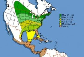 Baltimore Oriole Migration in the Southeast