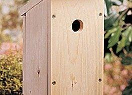 Prepare Your Yard for Nesting Season