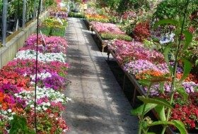 Plants For Containers: Oh The Choices!