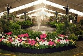 Places to Go, Things to Do: Festival of Flowers