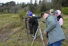 Spring Northwest Bird Festivals