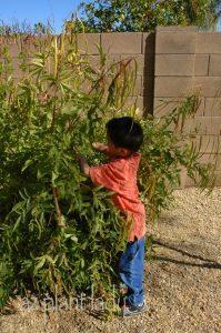 Gardening with children.