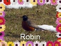 The Robins Have Returned!