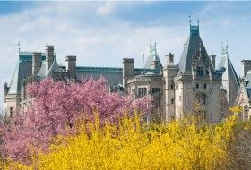 Places to Go, Things to Do: Biltmore Festival of Flowers