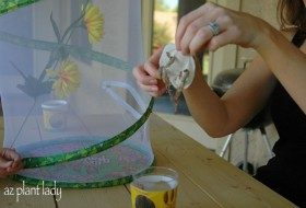 Moving butterfly chrysalis to butterfly enclosure