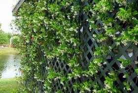 A Wall of Bloom