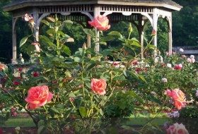 Places to Go, Things to Do: Thomasville Rose Festival