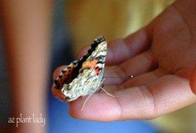 Butterfly in hand.