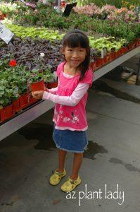 Choosing plants at the nursery