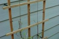 A good trellis for an annual vine or Clematis which are easy to grow.