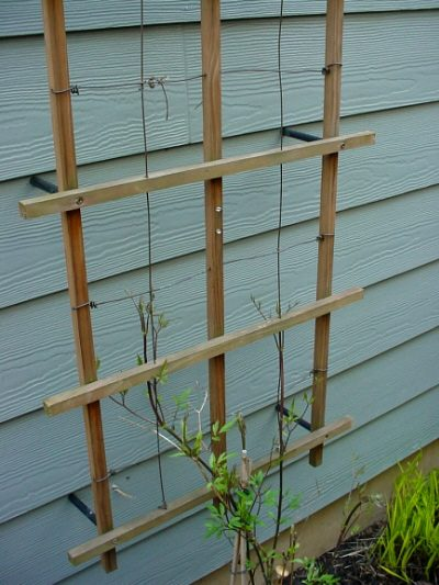 how to build espalier trellis