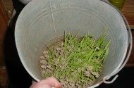 lavender stems gathered in a bucket