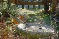 Winter siting of birdbath is different than summer.