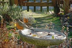 Winter siting of birdbath is different than summer.