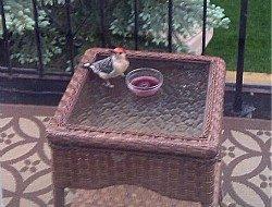 red bellied woodpecker | paula bonelli | birdsandbloomsblog.com