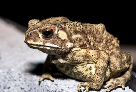 toad, photographer darren melrose