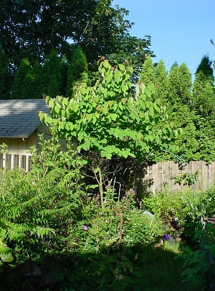 Good Shade Trees For Backyard Australia : quieter back yard in a shade tree make great a location for a