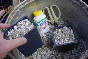 Perlite (white) and pumice half and half in a container deep enough for the length of the cutting.