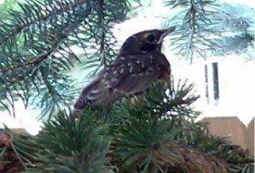 baby robin | birds and blooms blog | paula bonelli