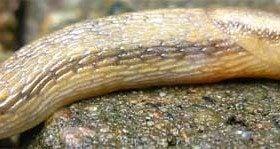slug image | birdsandbloomsblog.com