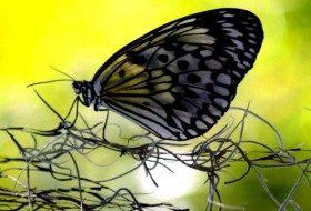 butterfly by Jenny Barovich