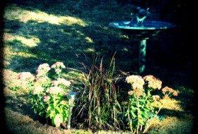 Sedums, grass and a birdbath