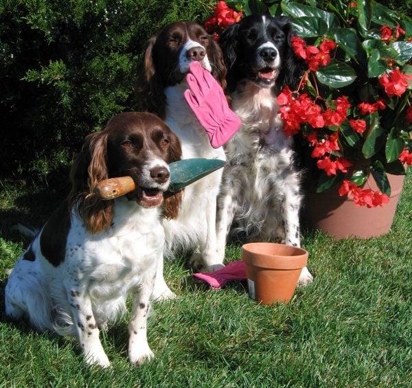 Οι βοηθοί του κηπουρού..