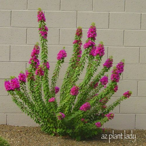 Types Of Bushes For Landscaping