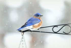 Embrace Winter and Count Birds
