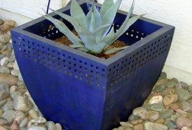 Creative Plant Ideas for Containers