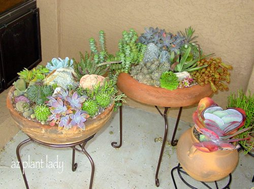 Creative Plant Ideas For Containers Birds And Blooms
