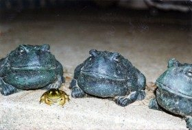 You Don't Say: Frog Gathering