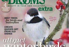 Name Our Cover Bird