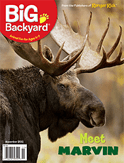 big backyard magazine ages 4 7