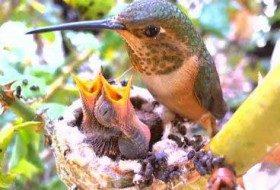 Popular Nest Cams