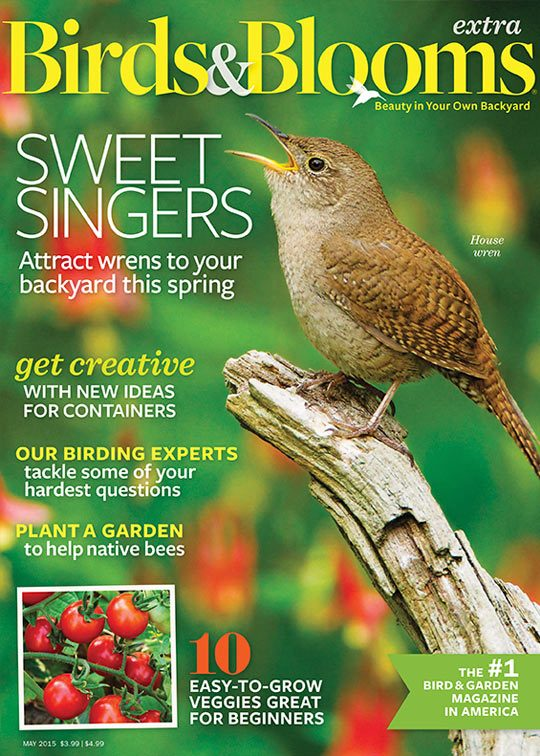 Birds and Blooms Magazine February / March 2015 Bring In More Blue Jays