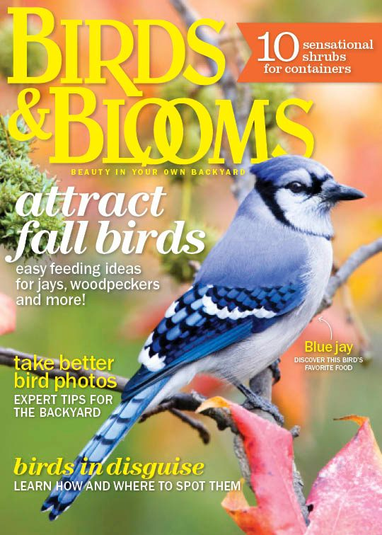 Birds and Blooms Extra Magazine