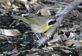 EdinburgScenicWetlands–birding and native plant hotspot
