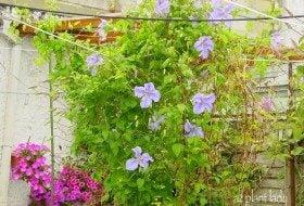 Garden Design: Cool Colors