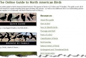 Check Out the New Audubon Online Bird Guide