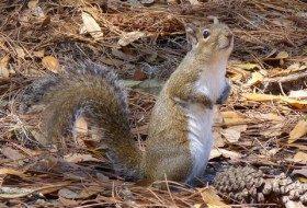 National Squirrel Appreciation Day!