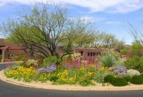 Garden Design: Using Contrasting Colors
