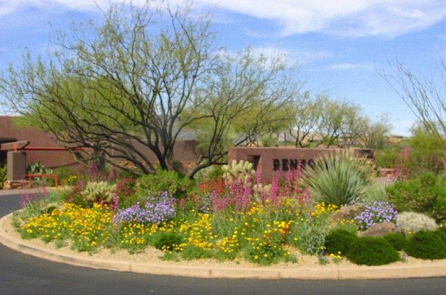 Cool and Warm-Colored Wildflower Garden