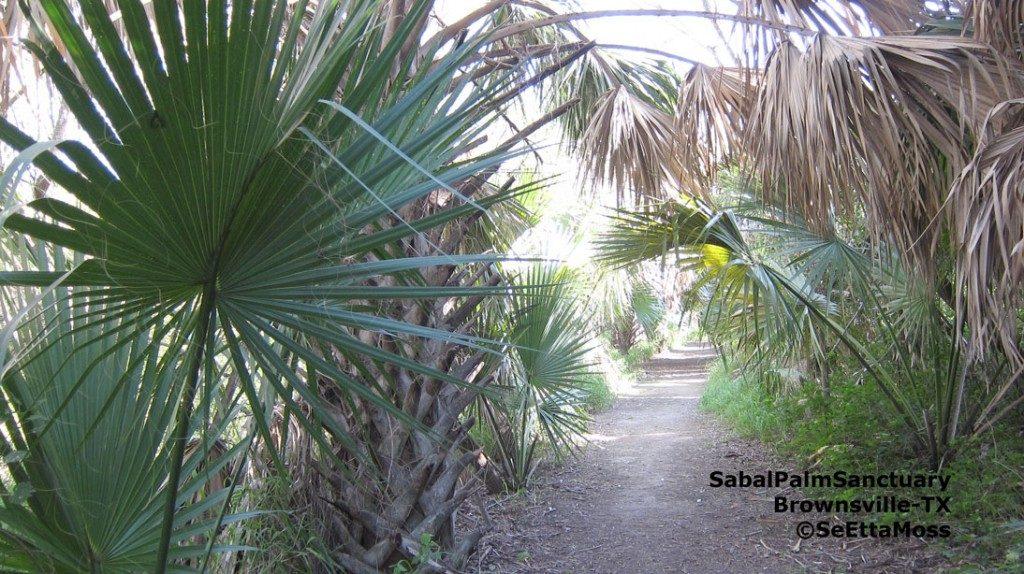 Sabal Palm Sanctuary Birding Hotspot Extraordinaire