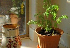 Create An Indoor Garden Using Carrot Tops