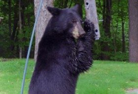 Fun Friday Photo: Black Bear at Feeder