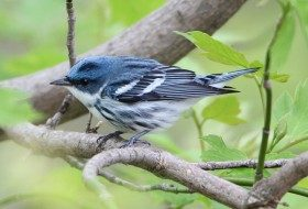 Go See Some Warblers this Spring