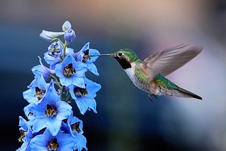 Delphinium Attracts Hummingbirds | Amazing Flowers That Attract Hummingbirds To Keep In Your Homestead